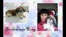 VLOG Моя собачка породы Ши тцу Уход питание и впечатление