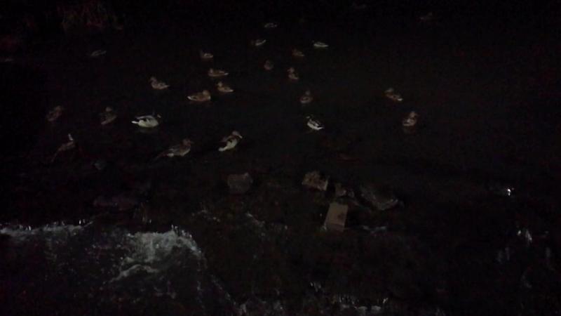 Консольные светильники в Парке Судостроителей