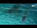 Дельфиненок появился во время представления