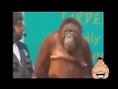 Приколы. Смешные обезьяны. Funny monkeys!