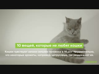 10 вещей, которые не любят кошки