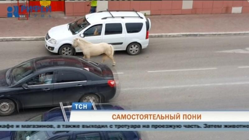 В Перми любопытный пони заглянул в кафе и винный магазин