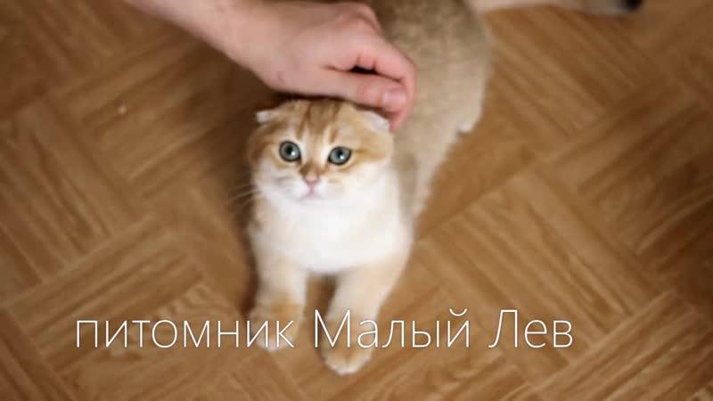 Сладкий мальчик Чиз Кейк Малый Лев 🍥🍰🍭 SFS ny 11 💙 SFS ny 11