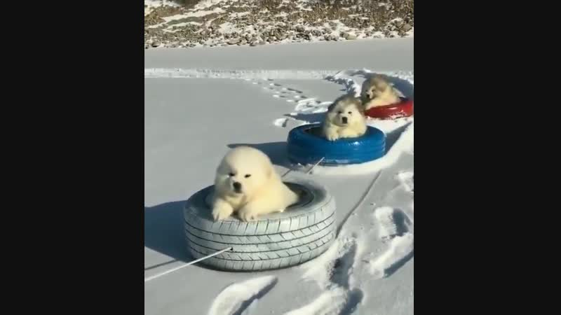 All aboard the fluff train!