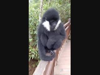 Monkey's Minimoog Filter LFO