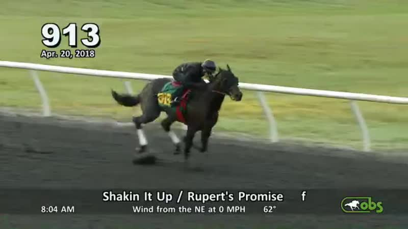 .@OBSSales Hip 913 Shakin It Up Ruperts Promise filly worked a quarter in 20.4 for @eddiewoods2yos OBSSpring