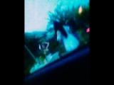 прячась в машине от комариков