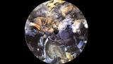 Morphology - 32 ( Vortex Traks Vol. 02 ) ( Vortex Traks Records 2016 )