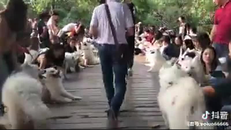 когда в городе всего одна площадка для выгула собак