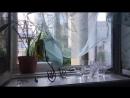 Натюрморт с зеркалом тюлью и дилдо