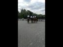 танцы лошадок Москва