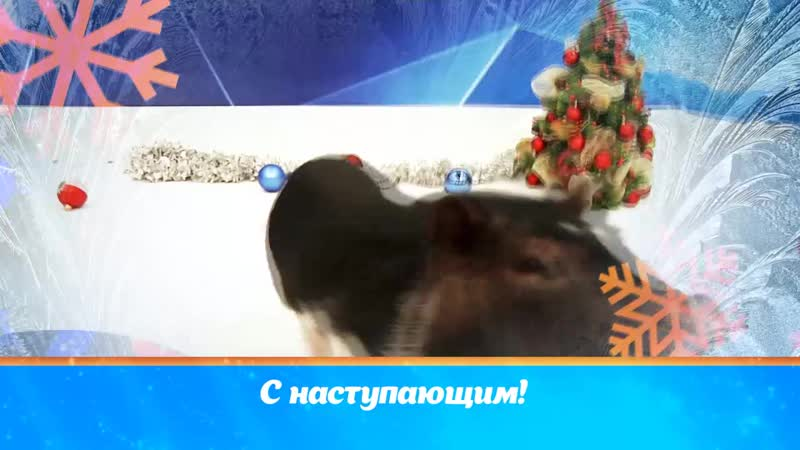 Василиса С наступающим!