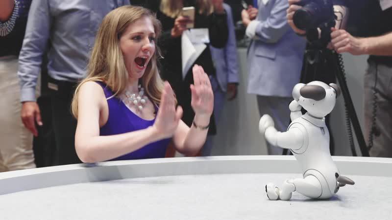 Sony на презентации представила и показала возможности нового робота Айбо. Sony's adorable new Aibo comes to the US.