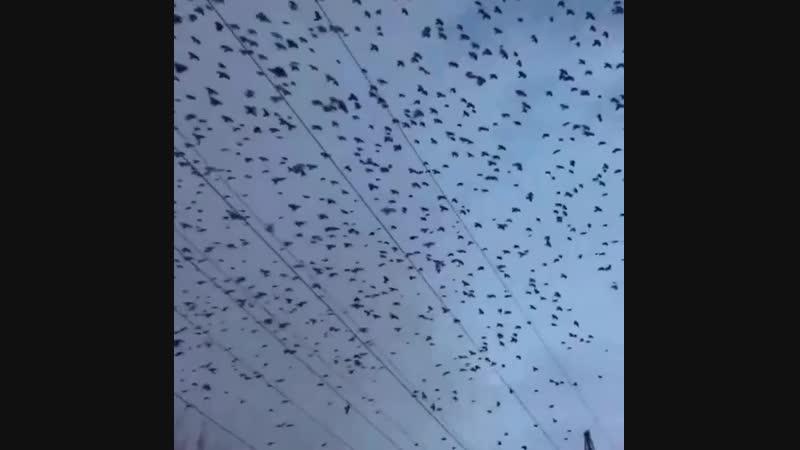 В Тюмени снимается продолжение фильма Птицы...