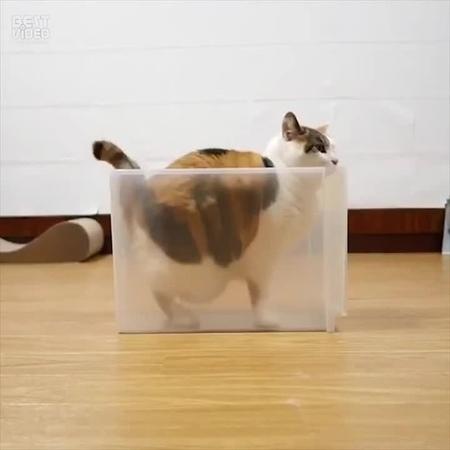 Танец в коробке_By LoL