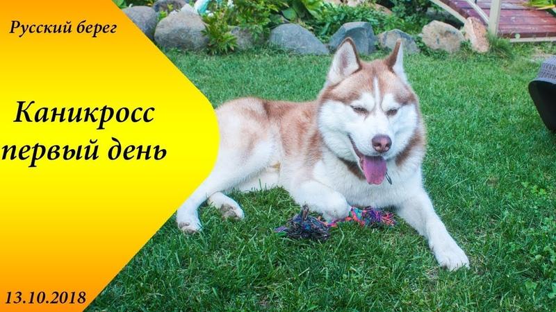 Русский берег 2018 Каникросс 1 день Драйленд Хаски