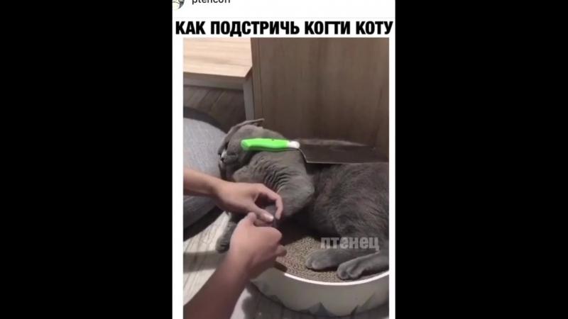 Как пострич когти у кота