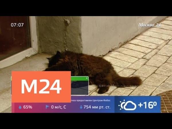 Кота Бегемота из Булгаковского дома украли под благим предлогом - Москва 24