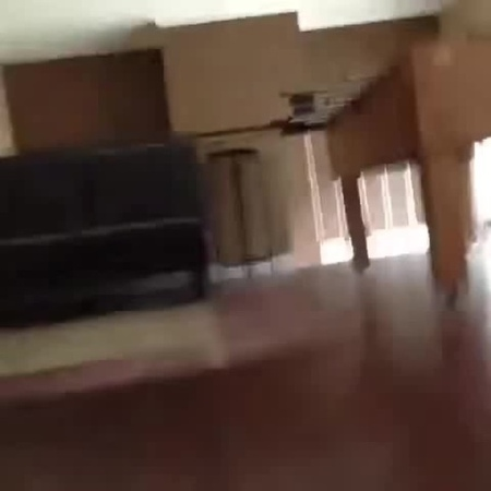 Dog Falls Off Balcony