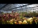 Питомник хищных растений Великобритании