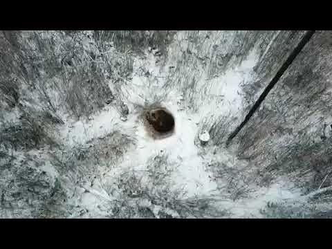 Медведь в Снежинске