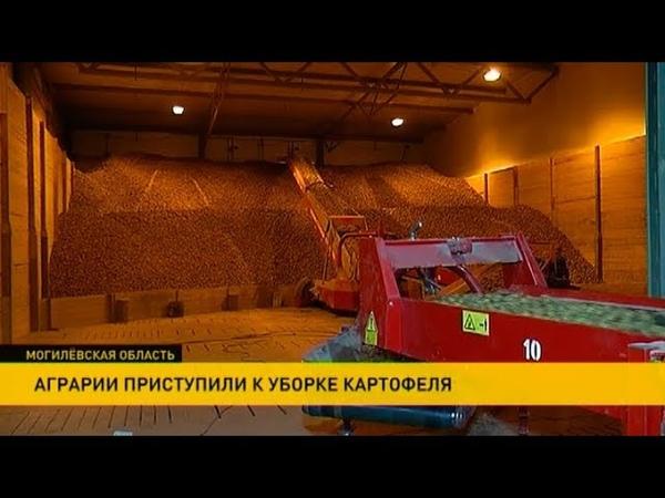 Рекорды по урожайности картофеля бьёт Шкловский район