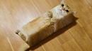 「かわいい猫」 笑わないようにしようとしてください - 最も面白い猫の 2