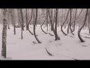 Танцующий Лес. Видео квадрокоптер. Рязанская область.