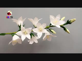 ABC TV _ How To Make White Peachleaf Bellflower Paper Flower - Craft Tutorial.mp4