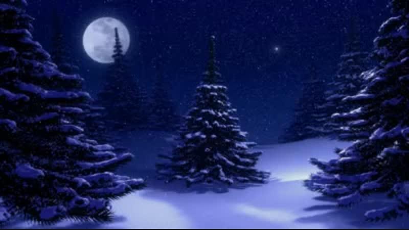 Новогодняя ёлка в ночном лесу праздничный футаж