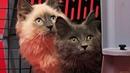 Смешне коты и кошки. ЛУЧШИЕ приколы с котами и котиками 2018 СМЕШНЫЕ ВИДЕО