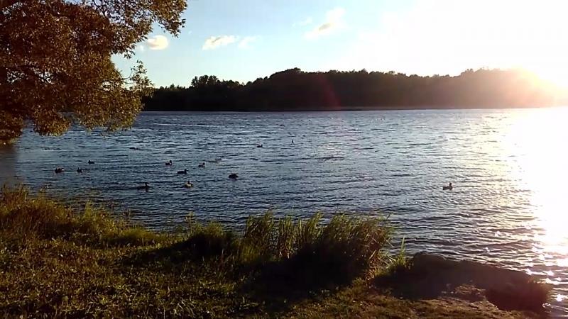 река Ижора Колпино