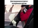 Вот почему я хочу собаку!