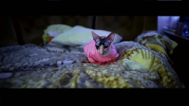 Mister meow POST PROD/