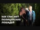 Как спасают истощенных лошадей полиции