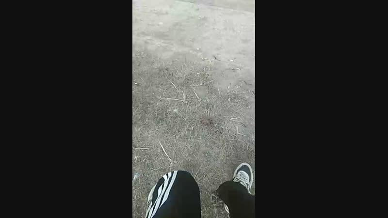 Алхас Волкшо - Live