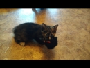 Кошка Шаня и котенок в добрые ручки