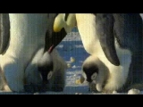 воспитание на северном полюсе