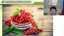 Сорта смородины красной селекции Всероссийского НИИ селекции плодовых культур