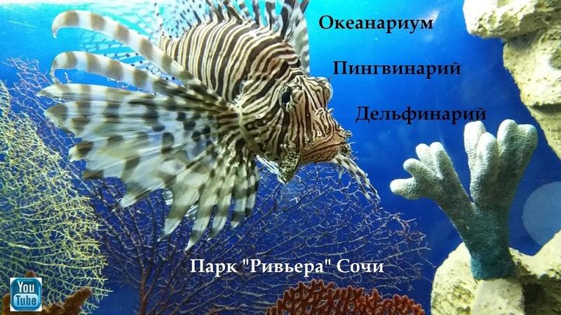 Океанариум Пингвинарий Дельфинарий Парк Ривьера Сочи