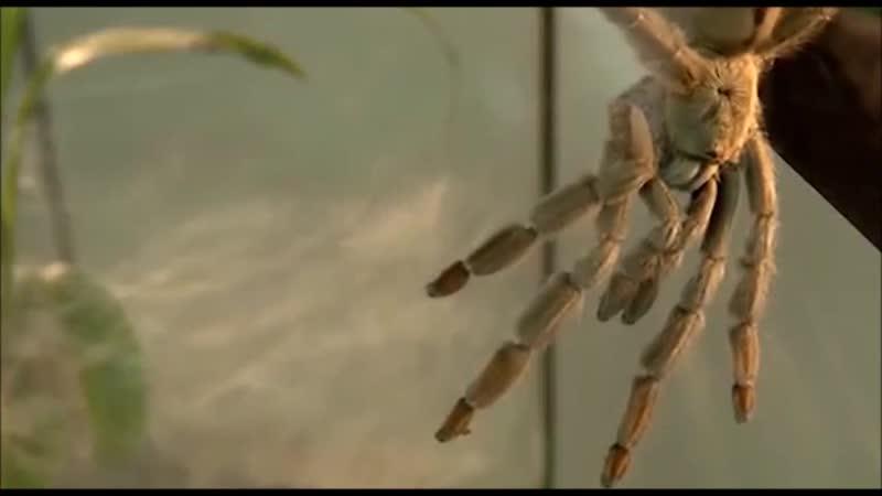 Выставка Удивительный мир пауков в Саратовском музее краеведения