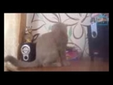 Top 50 Funny Cats And Dogs Dancing To Music Of All Time_144p.3gp