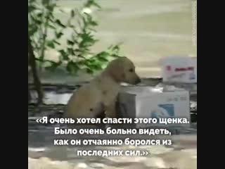 Тонущий щенок