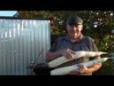 Уборка дайкона урожайность разных сортов дайкона в этом сезоне