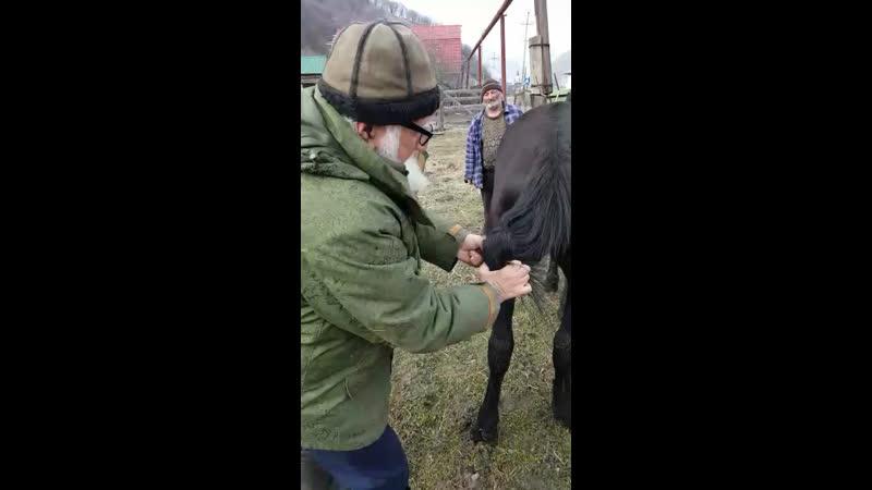 Как завязывать хвост лошади