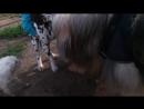 Пёс Тотоша вернулся к друзьям по площадке и ещё познакомился с подружкой Итчи 1 сентября