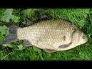 Насадка с ванилью на мирную рыбу