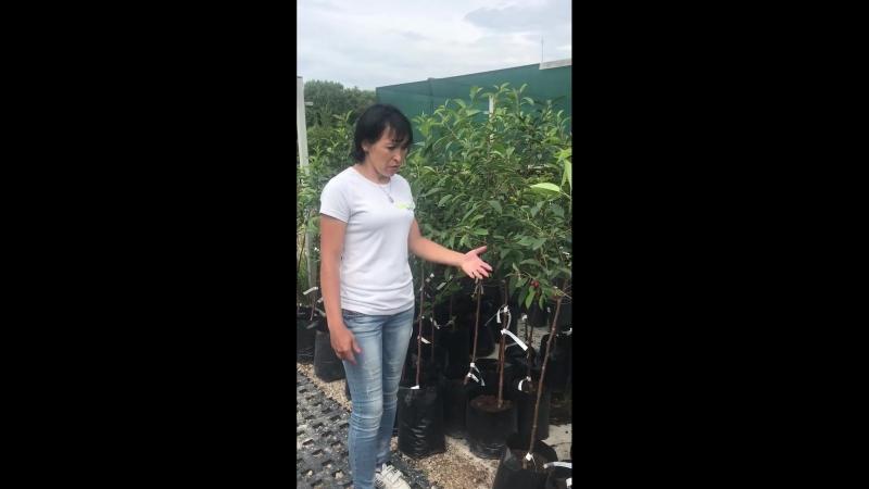 Лайфхаки от Заокских. Как правильно выбрать саженцы плодовых деревьев