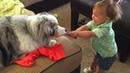 Dogs 🐶🐕 🐶And Babies 👶👶👶 Are Best Friends 🔴 개와 아기는 가장 친한 친구입니다 2018