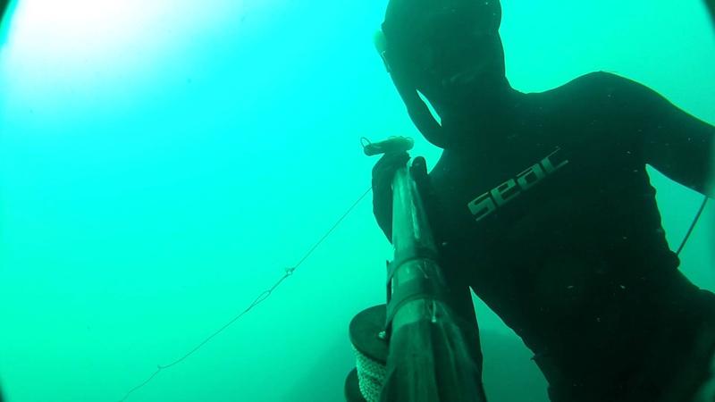 Подводная охота. Стая луфарей. Мыс Фиолент. 26.07.2012